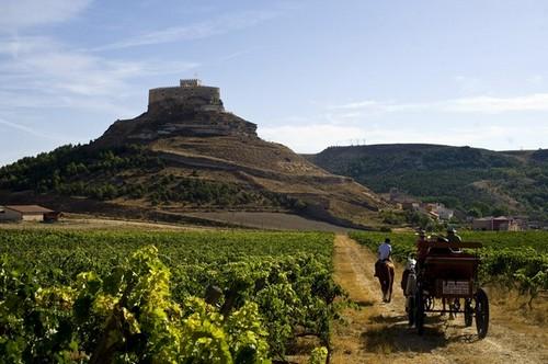 Винные туры и экскурсии Мадрид Испания - Дегустация вина , винодельни в Рибера дель Дуэро Ribera del Duero.